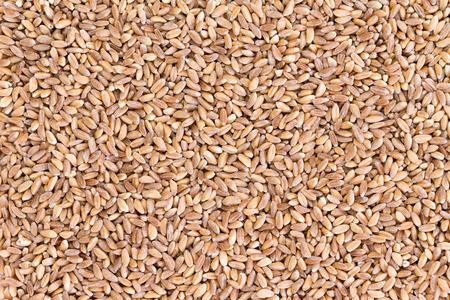 cultivo de trigo: Textura del fondo de semillas de trigo perlados farro casco saludables al cultivo de especialidad cultiva en partes de Asia y Europa, especialmente Italia