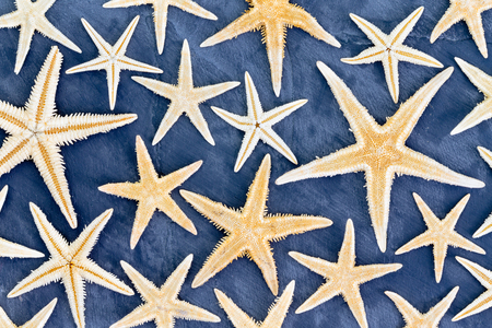 echinoderm: Top down view on full frame background pattern of dried starfish in various sizes over blue background for beach or ocean life theme Stock Photo
