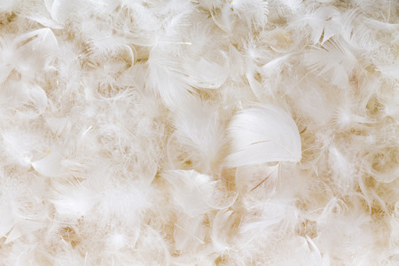 weightless: Light fluffy white feather background texture of goose or duck down in a full frame view conceptual of luxury and elegance Stock Photo