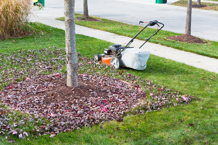 grass verge: Neatening up the lawn in autumn or fall using a lawnmower to cut and bag the grass and dead leaves under trees alongside the road