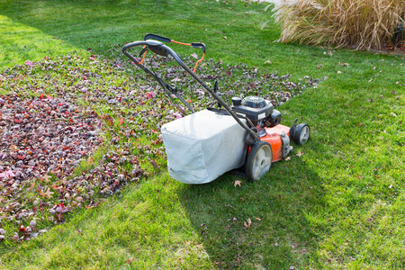bagging: Cutting and bagging grass and leaves in the fall with a lawn mower in a neighbourhood backyard in evening light Stock Photo