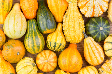 variegated: Background of colorful variegated striped ornamental fall or autumn gourds with different shapes and textures packed close together in a full frame view