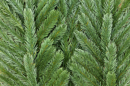 fake christmas tree: Close up on fake plastic pine tree foliage with copy space for Christmas holiday or nature theme Stock Photo