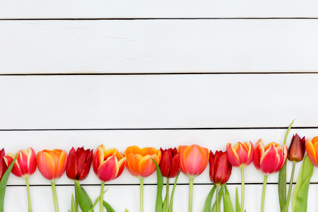 symbolics: Bottom border of colorful red and orange spring tulips over a white stained wooden market table with copy space for your advertisement or message Stock Photo