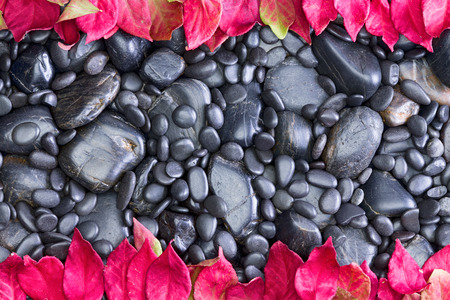 High Angle Full Frame View of Polished Black Smooth River Rocks of Various Sizes Bordered by Vibrant Red Autumn Leaves from Deciduous Trees