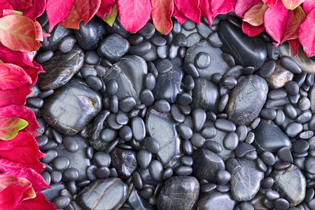 bordered: High Angle Full Frame View of Black Smooth River Rocks of Various Sizes Bordered Top and Left by Vibrant Red Autumn Leaves from Broad Leaved Trees Trees