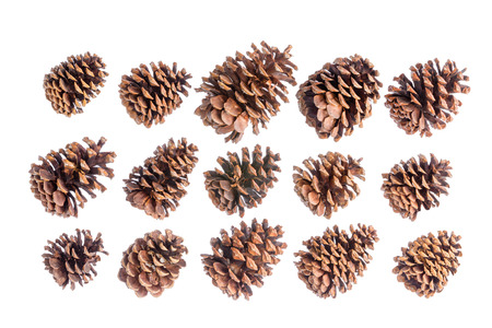 natural selection: Selection of fifteen different natural brown pine or spruce cones isolated on white arranged in three neat rows pointing diagonally to the right