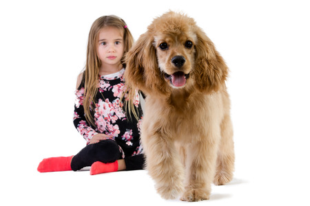 Young girl watching her dog, a young golden spaniel puppy, walking away with a sad expression with the dog approaching the camera in the foreground