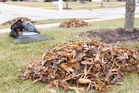 Neat raked pile of dried brown fall leaves or foliage on a mowed lawn in a neighbourhood garden with a rake visible behind on the grass