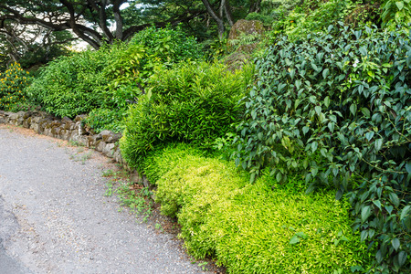 Lush green tropical vegetation bordering a footpath through a park on Oahu, Hawaii in a scenic background landscape