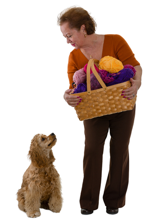 Elderly woman with a basket of colorful balls of knitting wool and her dog bending down to look at the cocker spaniel who in turn is looking up at her