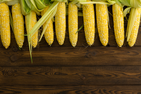 Top border of fresh peeled organic corn on the cob arranged in a row over a rustic wood background with copy space at an organic farm market