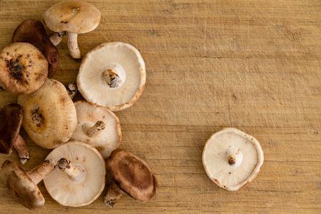Pile of freshly harvested autumn Black Forest shitake mushrooms Stock Photo