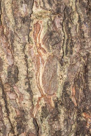 bark old texture photo