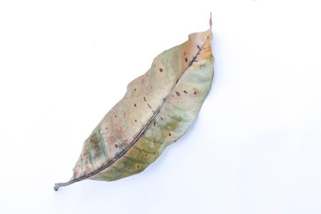 dry leaf: Dry leaf