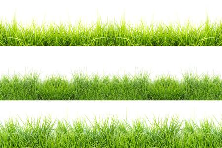 grass set on white background