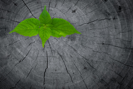 renewal: little tree on Stump. New development and renewal as a business concept