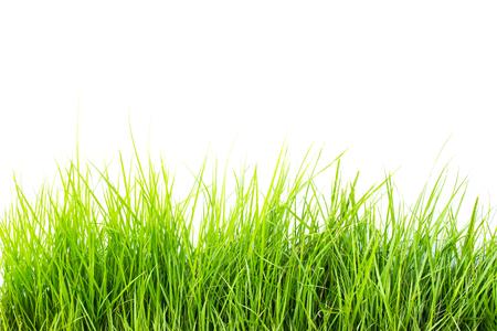 白い背景の上の草します。