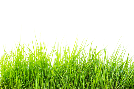 Grass on white background 版權商用圖片 - 44689968