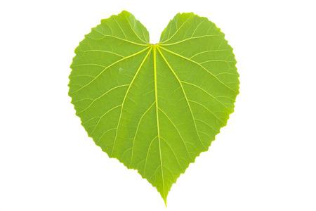 heart leaf shaped on white background Banco de Imagens