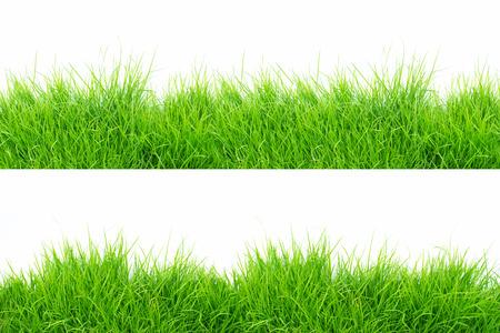 Grass on white background Banco de Imagens
