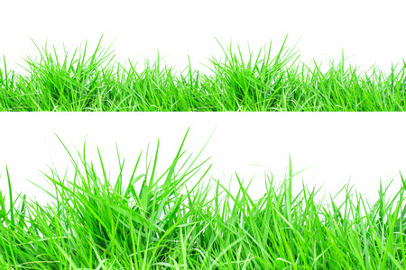grass: Grass.Grass on white background Stock Photo