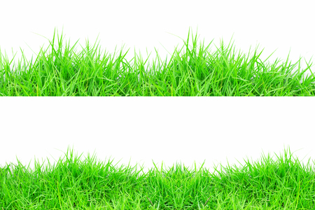 grass: Grass on white background Stock Photo