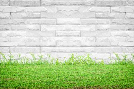 Gras op een witte muur achtergrond Stockfoto