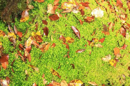 mosses: mosses and ferns Stock Photo