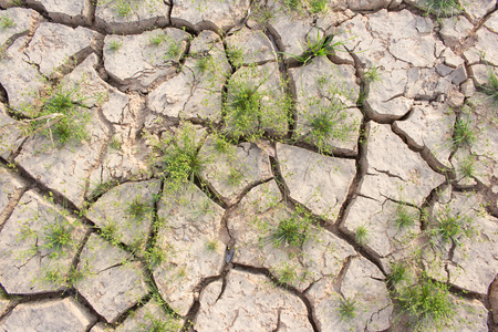 living thing: Cracked ground and survival living thing, cruel from global warm