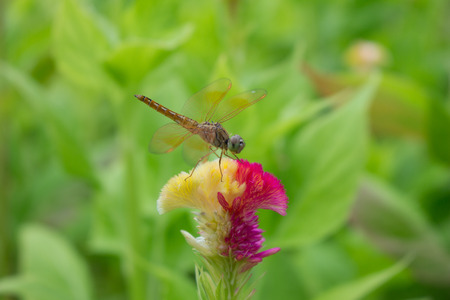 non urban 1: Close up of a Dragonfly stop on the flower. Stock Photo