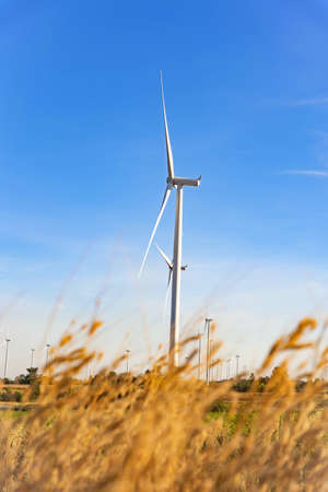 Wind turbines farm is an alternative electricity source, Concept of sustainable resources, Beautiful Orange grass in summer day on foreground with wind generators turbines, Renewable energy concept. Imagens