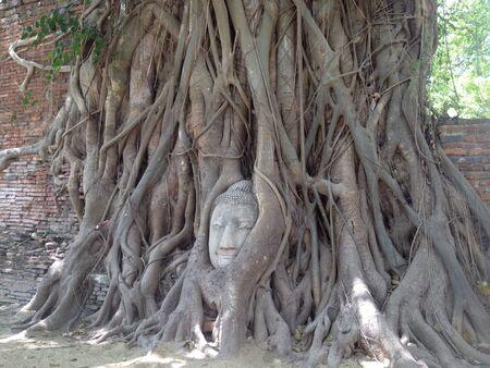 ayuthaya: Buddha head entangled in the tree in Ayuthaya Thailand Stock Photo