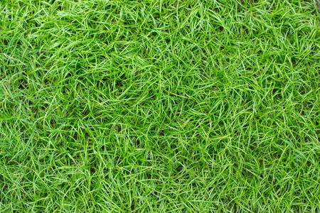 green grass. natural background texture.