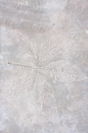 marbled effect: Hoja en el cemento de textura de fondo