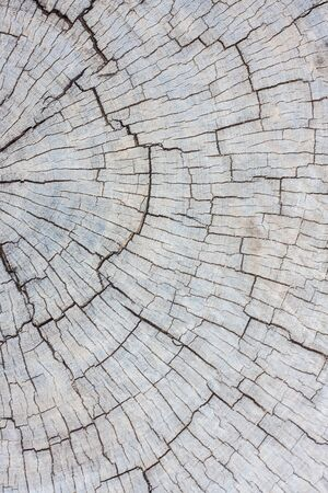 deteriorated: Wood texture of cut tree trunk, close-up