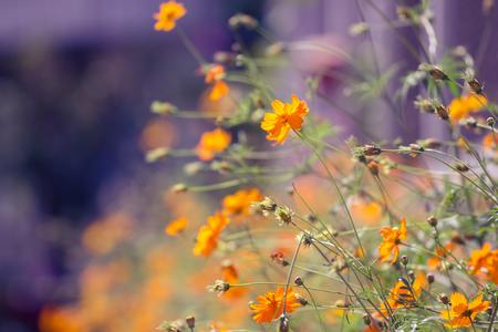 clouds  garden: Blossom orange flower in a Garden