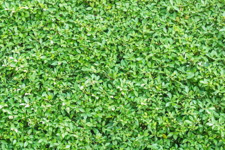 tile able: Green leaves wall background