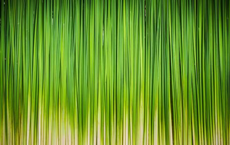 Green leaf of Papyrus abstract background