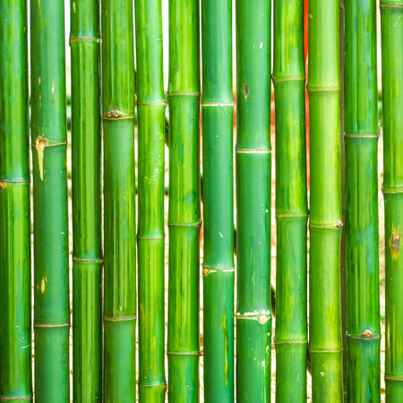 bamboo house: Bamboo arranged in a vertical background Stock Photo