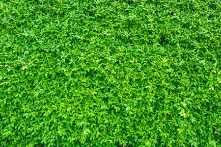 배경에 녹색 잎