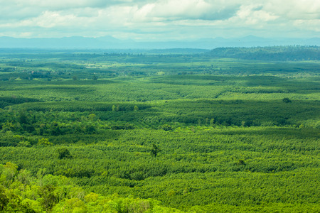 green tree aerial view of forest