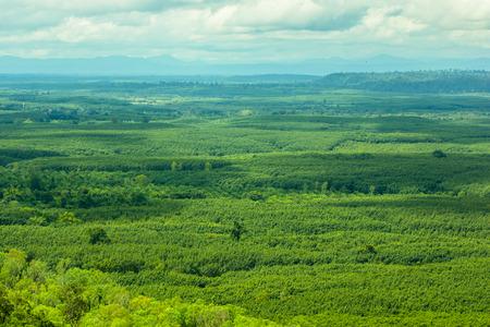 숲의 녹색 나무 공중보기