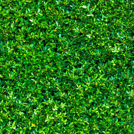 tileable: green leaf background. Seamless Tileable Texture