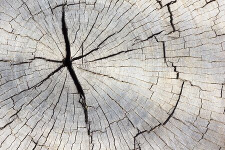 decomposition: Wood texture of cut tree trunk, close-up