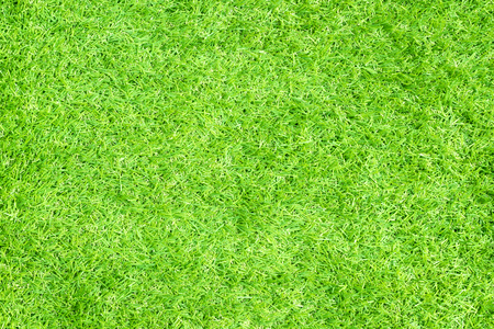green  pattern: green grass. natural background texture Stock Photo