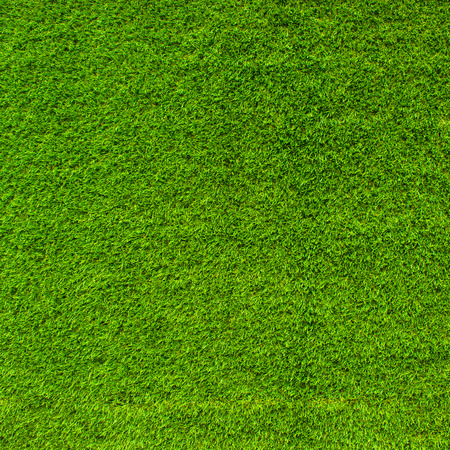 fairly: Green grass background or the naturally walls texture Ideal for use in the design fairly. Stock Photo