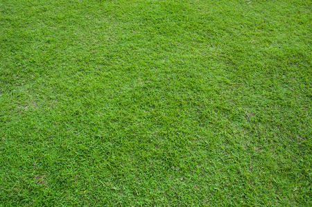 Green grass background or the green nature wall texture Ideal for use in the design fairly.