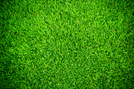 fairly: Green grass background vignette or the naturally walls texture Ideal for use in the design fairly.