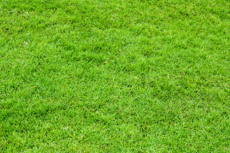 vignette green grass or the naturally walls texture Ideal for use in the design fairly.